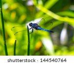 A Japanese Dragonfly Enjoying...