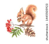 Red Squirrel On A Tree With A...