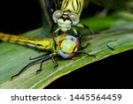Stock photo showing of eyes dragonfly and wings detail beautiful dragonfly in the nature habitat 1445564459