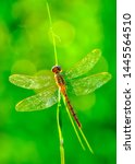 Stock photo showing of eyes dragonfly and wings detail beautiful dragonfly in the nature habitat 1445564510