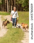 Stock photo dog sitter walks with many dogs on a leash dog walker with different dog breeds in the beautiful 1445780009