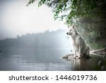 Berger blanc suisse at a rock in a beautiful landscape bewteen mountains. Dog at the lake with foggy mood.