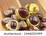 Ripe Chestnuts  Aesculus  On A...