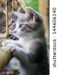 Stock photo  curious young kitten 144606140