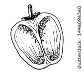 ink sketch of bell pepper... | Shutterstock .eps vector #1446096560