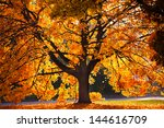 Tree With Golden Leaves In...