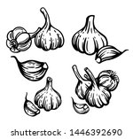 garlic set. hand drawn chopped... | Shutterstock .eps vector #1446392690