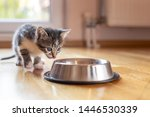 Stock photo beautiful little kitten licking milk from a bowl placed on the living room floor next to a window 1446530339