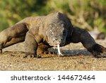 Komodo Dragon  Varanus...