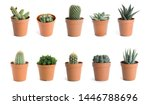 Set Of Different Cactuses On...