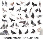 Isolated Pigeons In Different...