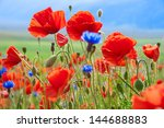 Field Of Wild Poppies And Othe...
