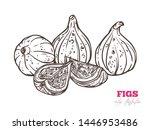 fresh figs hand drawn vector... | Shutterstock .eps vector #1446953486