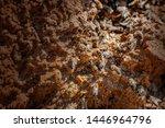 honey bees drinking water from...   Shutterstock . vector #1446964796