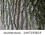 The Bark Of The Tree  The...