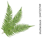 new zealand fern leaves | Shutterstock .eps vector #144725749