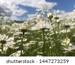 beautiful nature scene with... | Shutterstock . vector #1447273259