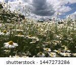 beautiful nature scene with... | Shutterstock . vector #1447273286