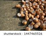 a pile of chicken eggshells | Shutterstock . vector #1447465526