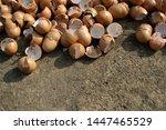 a pile of chicken eggshells | Shutterstock . vector #1447465529
