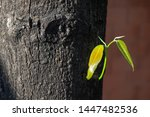 young branch growing out of big ... | Shutterstock . vector #1447482536