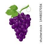 bunch of fresh purple grapes... | Shutterstock .eps vector #1448037056
