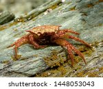 Stock photo the photo shows a beautiful crab it stands on a stone this photo i wanted to convey the beauty of 1448053043