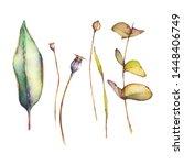 Set Of Watercolor Leaves...