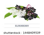 black elderberry stripe label ... | Shutterstock .eps vector #1448409539