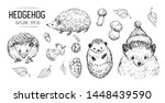 sketches of hedgehog. hand... | Shutterstock .eps vector #1448439590