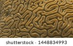 Close up of Brain coral underwater in tropical Caribbean