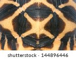 Stock photo shell of indian starred tortoise geochelone elegans tamil nadu south india 144896446