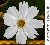 Close Up Of A White Blossom Of...