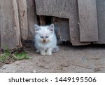 A Small Homeless Kitten At The...
