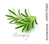 Stock vector rosemary branch rosemary realistic elements for labels of cosmetic skin care food product design 1449275360