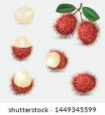 vector illustration of rambutan ... | Shutterstock .eps vector #1449345599