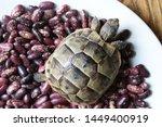 Stock photo little turtle petite baby tortoise 1449400919