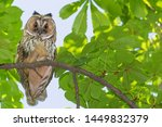 close up of owl sitting on... | Shutterstock . vector #1449832379