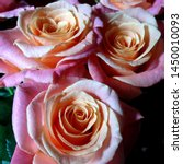 Stock photo macro photo nature blooming flower pink rose background plant rose with pink and open bud image 1450010093