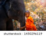 Small photo of Novices or monks hug elephants. Novice Thai standing and big elephant with forest background. , Tha Tum District, Surin, Thailand.