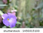 Closeup photograph of a purple...
