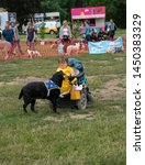 Small photo of Wachtebeke, Belgium, 13 July 2019. Hachiko. Assistance dogs are trained to assist people with a disability or condition. Dog picks up the smartphone on the ground and gives him to his teacher