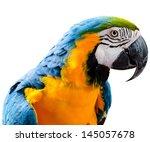 beautiful pet parrot | Shutterstock . vector #145057678