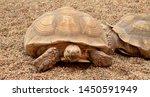 Stock photo couple tortoises on the sand 1450591949