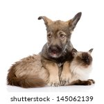 Stock photo puppy and siamese cat together isolated on white background 145062139