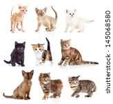 Stock photo different kittens collection 145068580