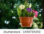 mirabilis jalapa  marvel of... | Shutterstock . vector #1450735253