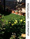 pots with petunia flowers... | Shutterstock . vector #1450735256