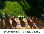 pots with petunia flowers... | Shutterstock . vector #1450735259