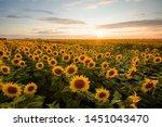 Rural Landscape Of Field Of...